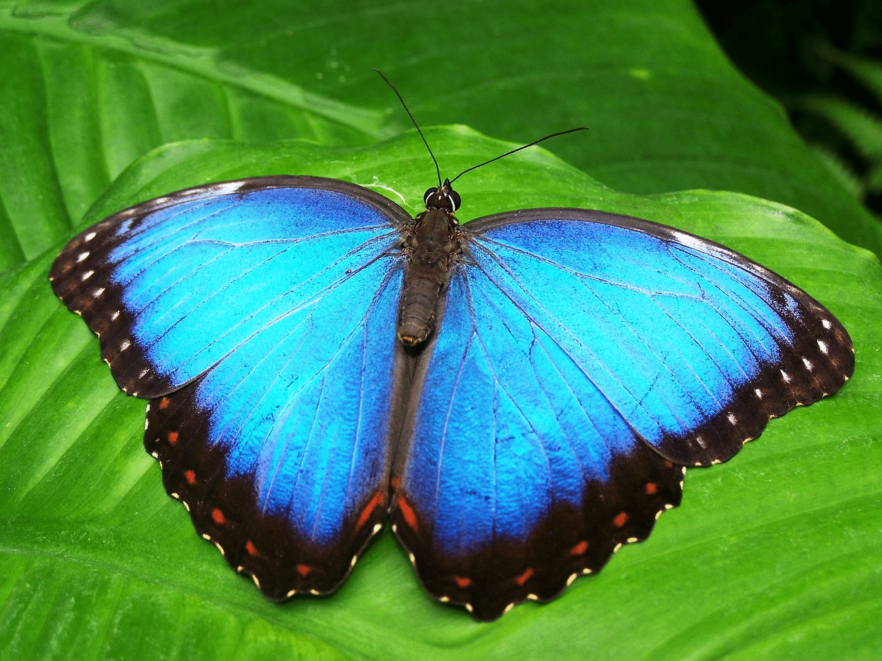 Three Great Tips for a Faster Butterfly